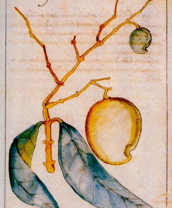 2. LE VOYAGE DES PLANTES vivrières et les Grandes Découvertes (XVe-XVIIe siècle).
